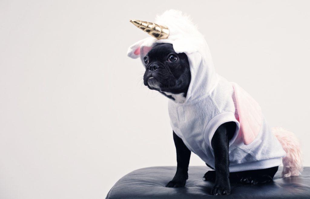 Een puppy in unicornpak als metafoor voor mijn therapie-angstjes