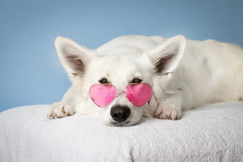 Dit is een chronisch vermoeide hond met een roze bril, omdat het kan.