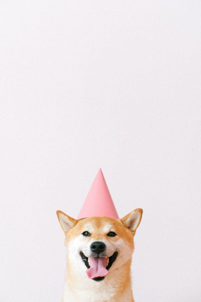 Deze hond was chronisch vermoeid maar wordt nu geleidelijk aan beter. Dat zie je aan het roze hoedje op zijn hoofd.