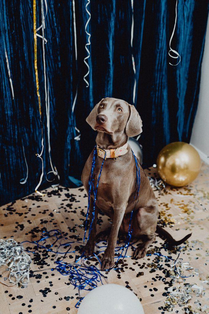 Een hond zit nogal verbouwereerd te kijken tussen veel gouden en blauwe confetti en slingers.